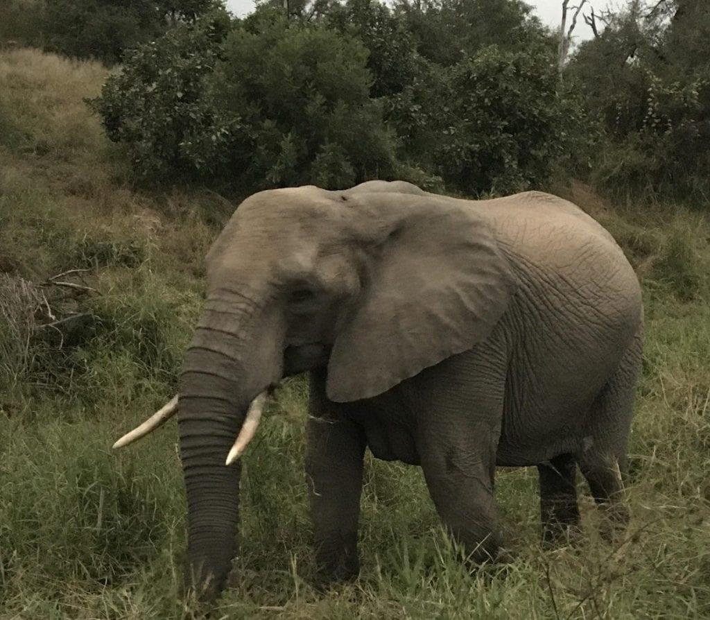 TRAVELER'S CORNER – Sara's South African Adventures